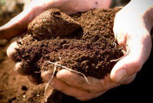 Профессиональный анализ почвы в СПб