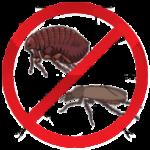 Уничтожение насекомых цена