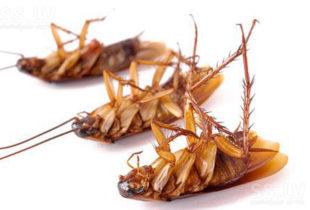 Борьба с насекомыми в квартире: не оставить вредителям ни шанса
